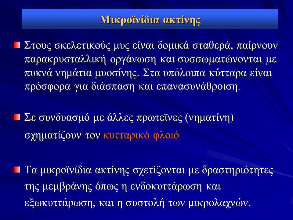 Μικροϊνίδια ακτίνης