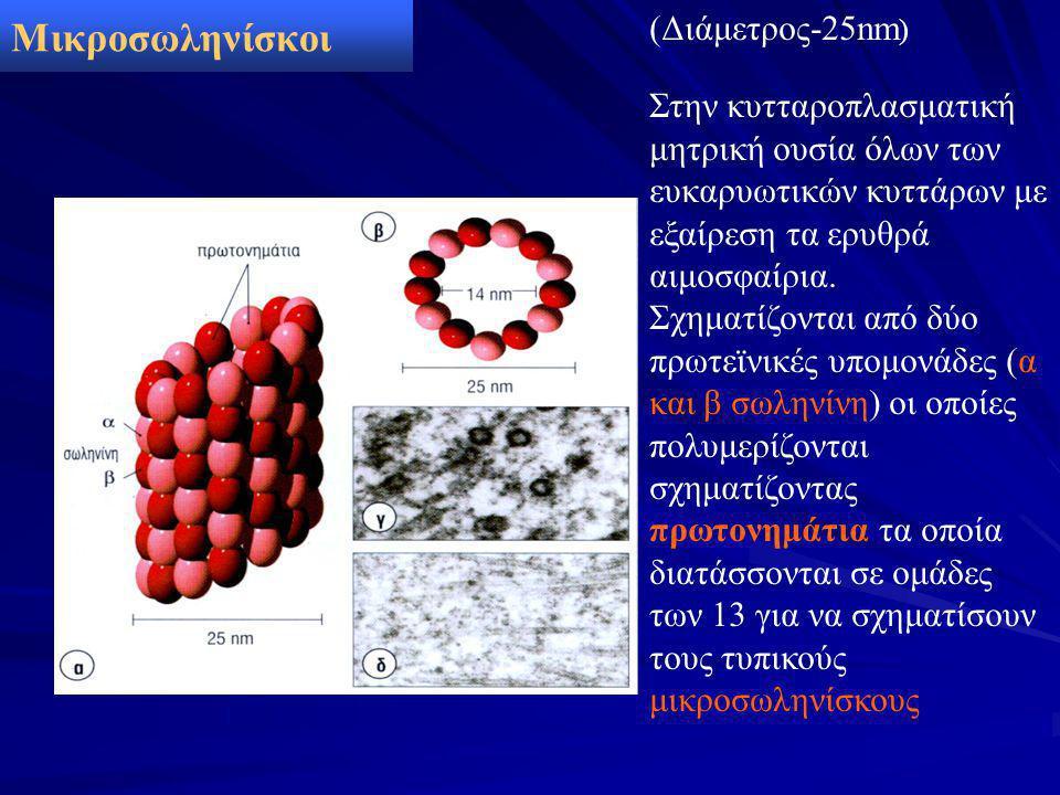 Μικροσωληνίσκοι (Διάμετρος-25nm)