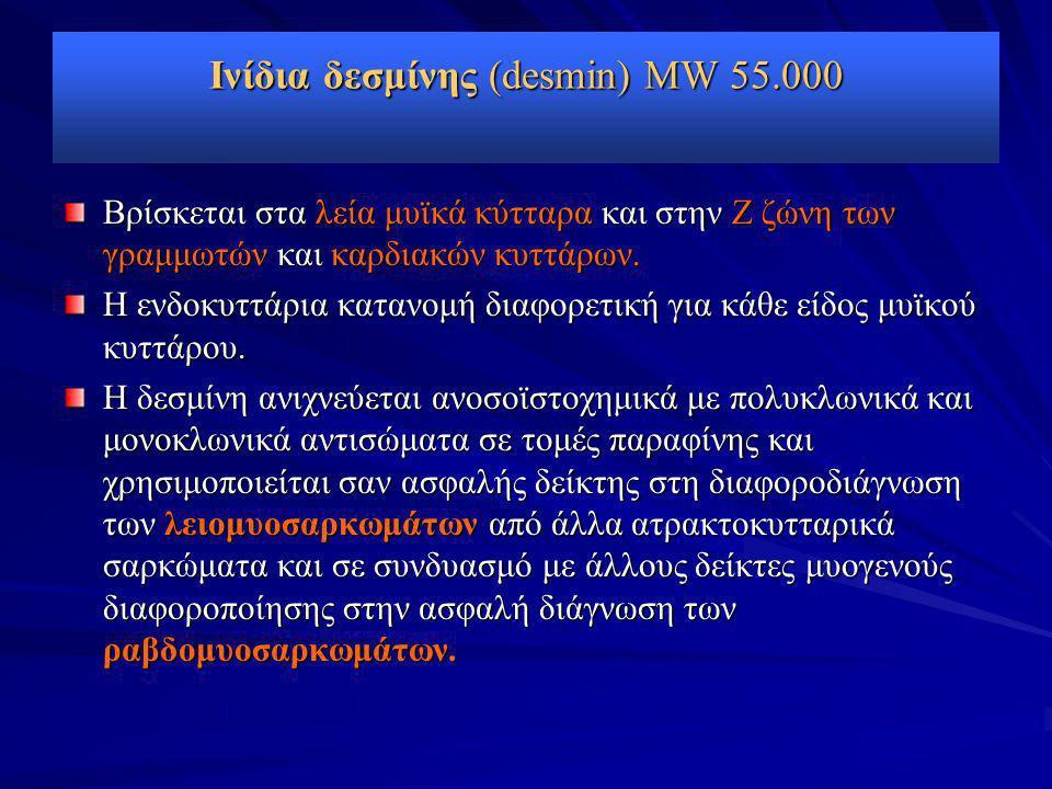 Ινίδια δεσμίνης (desmin) MW 55.000