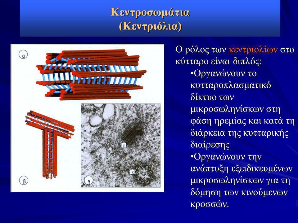 Κεντροσωμάτια (Κεντριόλια)