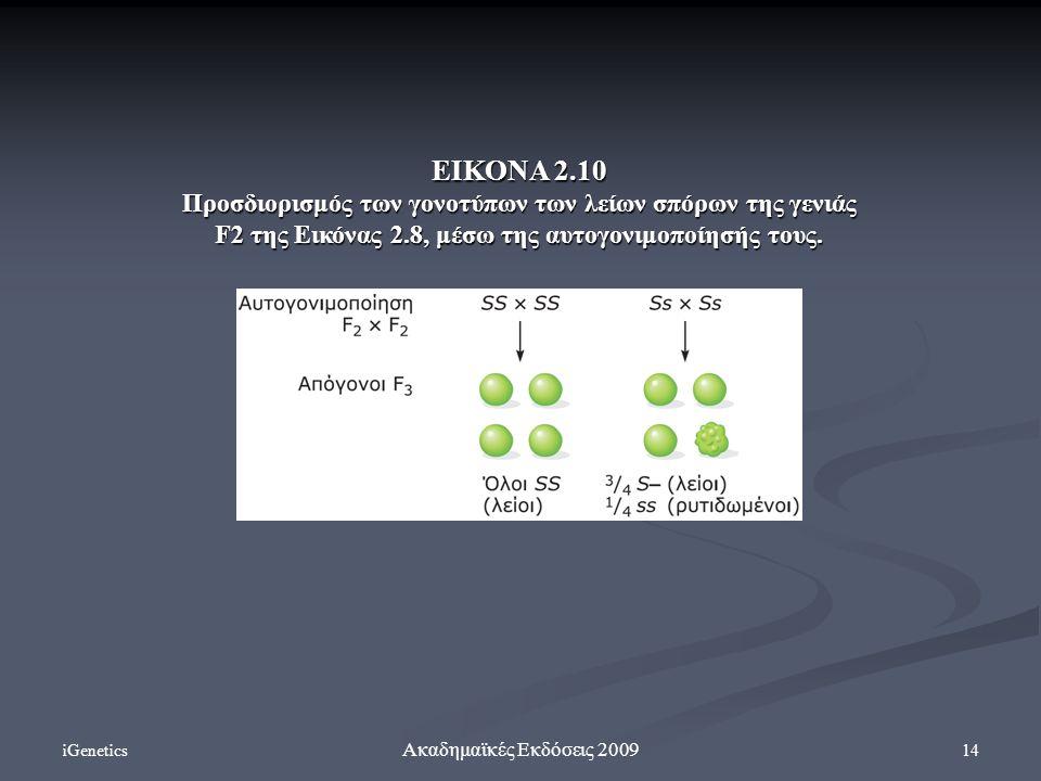 ΕΙΚΟΝΑ 2.10 Προσδιορισμός των γονοτύπων των λείων σπόρων της γενιάς F2 της Εικόνας 2.8, μέσω της αυτογονιμοποίησής τους.