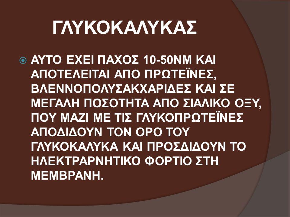ΓΛΥΚΟΚΑΛΥΚΑΣ