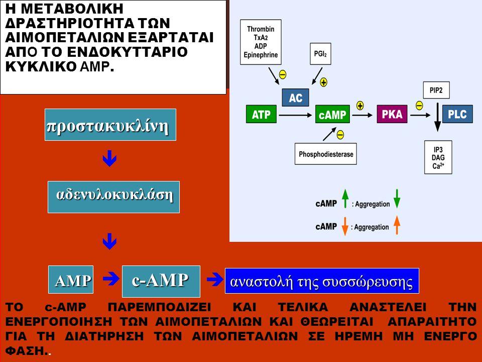  προστακυκλίνη  AMP  c-AMP  αδενυλοκυκλάση