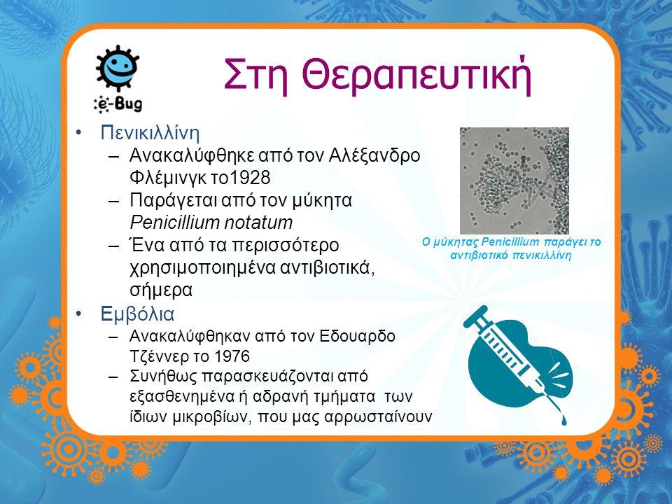 Ο μύκητας Penicillium παράγει το αντιβιοτικό πενικιλλίνη