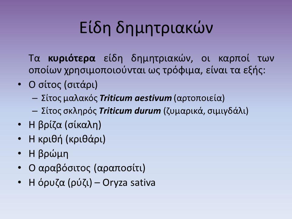 Είδη δημητριακών Τα κυριότερα είδη δημητριακών, οι καρποί των οποίων χρησιμοποιούνται ως τρόφιμα, είναι τα εξής: