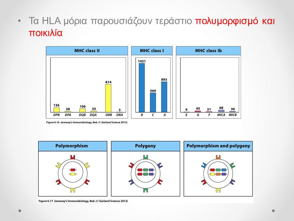 Τα HLA μόρια παρουσιάζουν τεράστιο πολυμορφισμό και ποικιλία