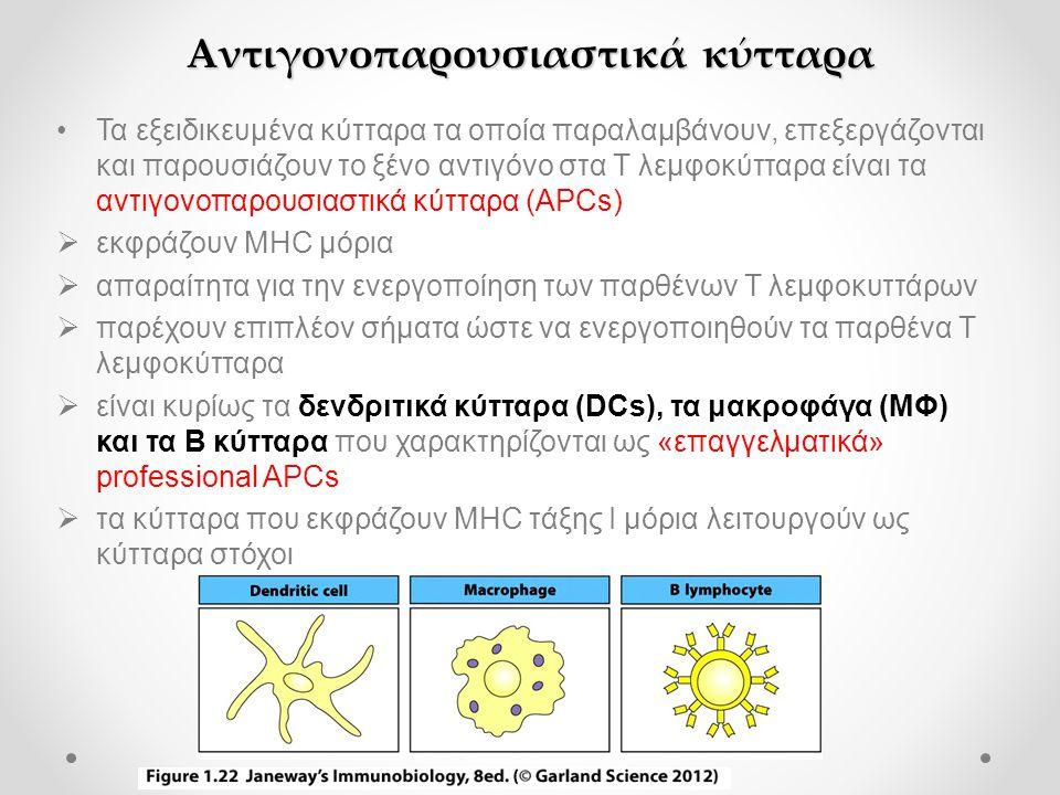 Αντιγονοπαρουσιαστικά κύτταρα