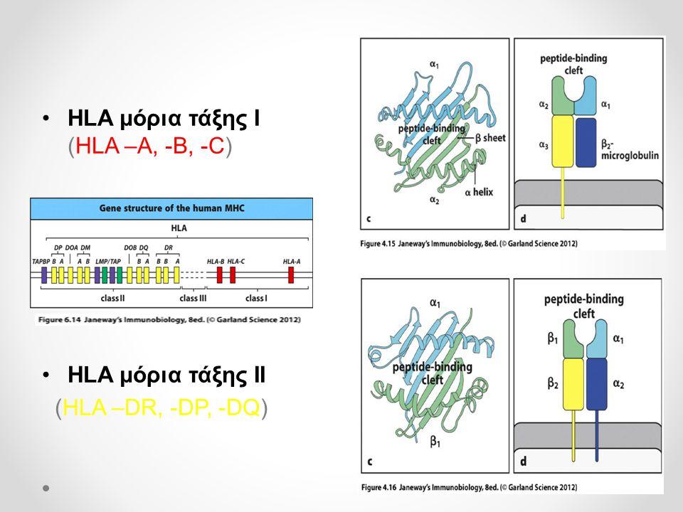 HLA μόρια τάξης Ι (HLA –A, -B, -C)
