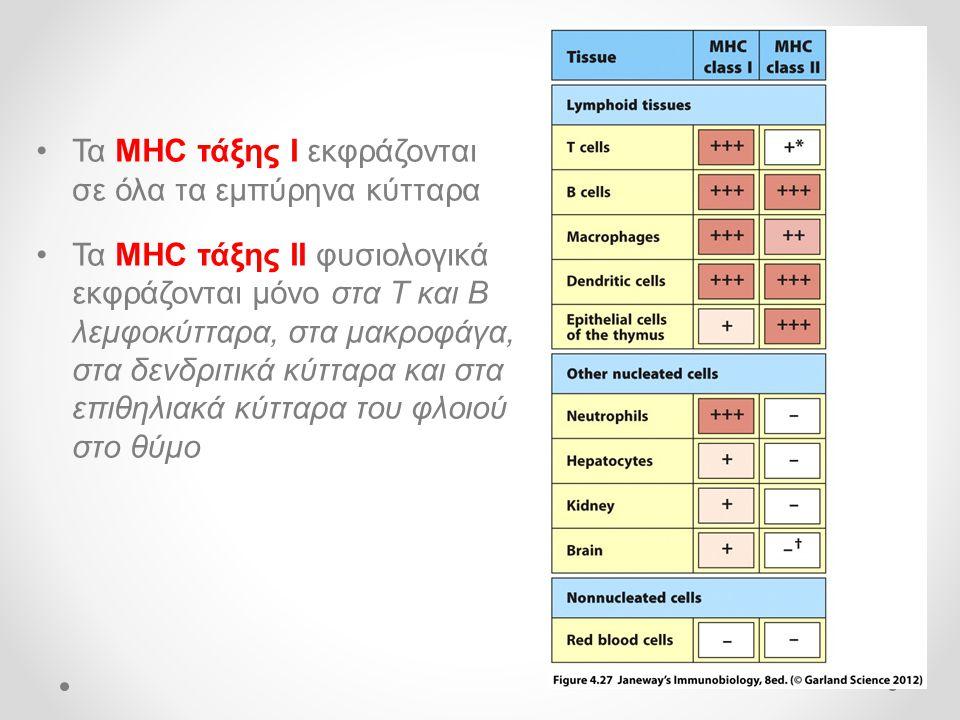 Τα MHC τάξης Ι εκφράζονται σε όλα τα εμπύρηνα κύτταρα