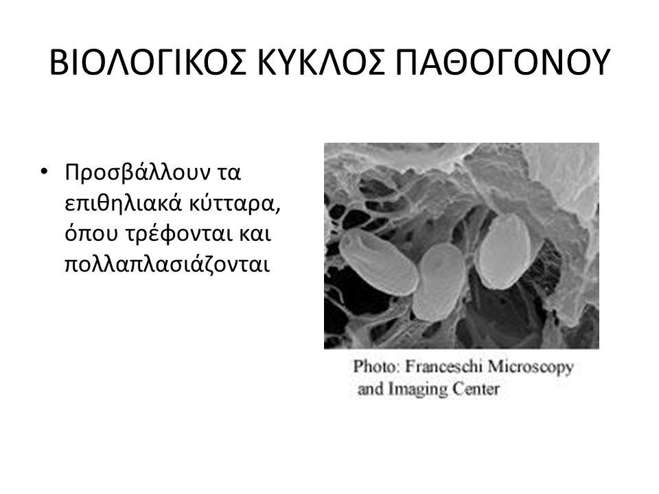 ΒΙΟΛΟΓΙΚΟΣ ΚΥΚΛΟΣ ΠΑΘΟΓΟΝΟΥ