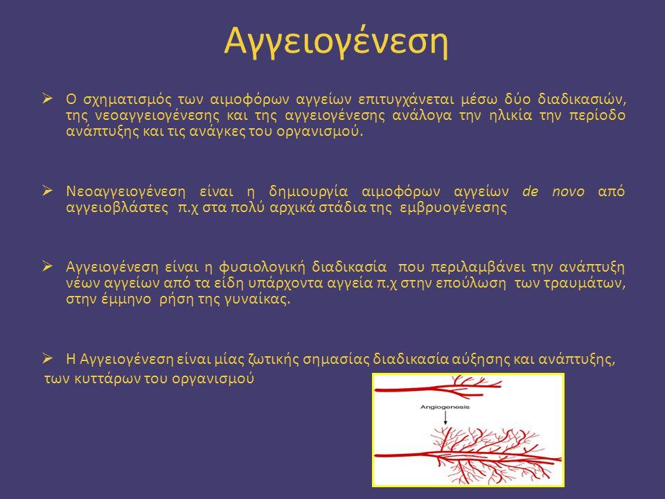 Aγγειογένεση