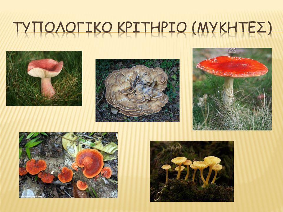 Τυπολογικο κριτηριο (μυκητες)