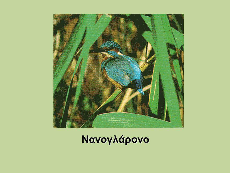 Νανογλάρονο