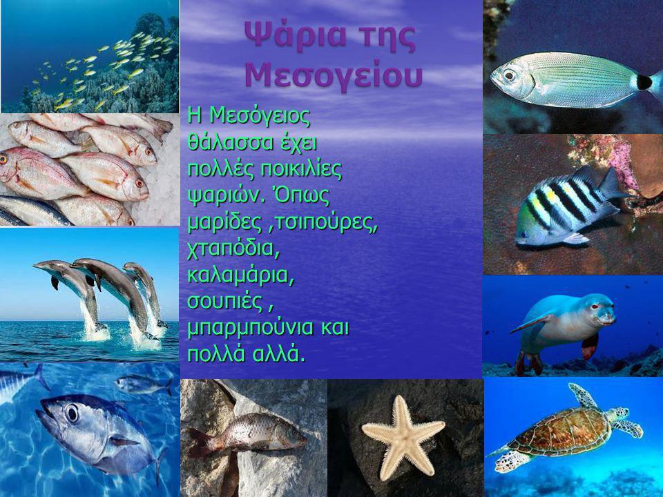 Ψάρια της Μεσογείου