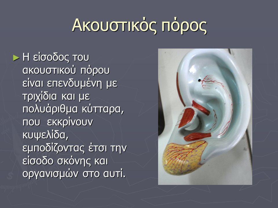 Ακουστικός πόρος