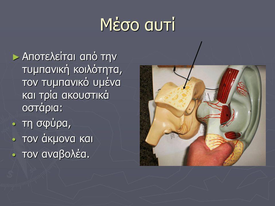 Μέσο αυτί Αποτελείται από την τυμπανική κοιλότητα, τον τυμπανικό υμένα και τρία ακουστικά οστάρια: