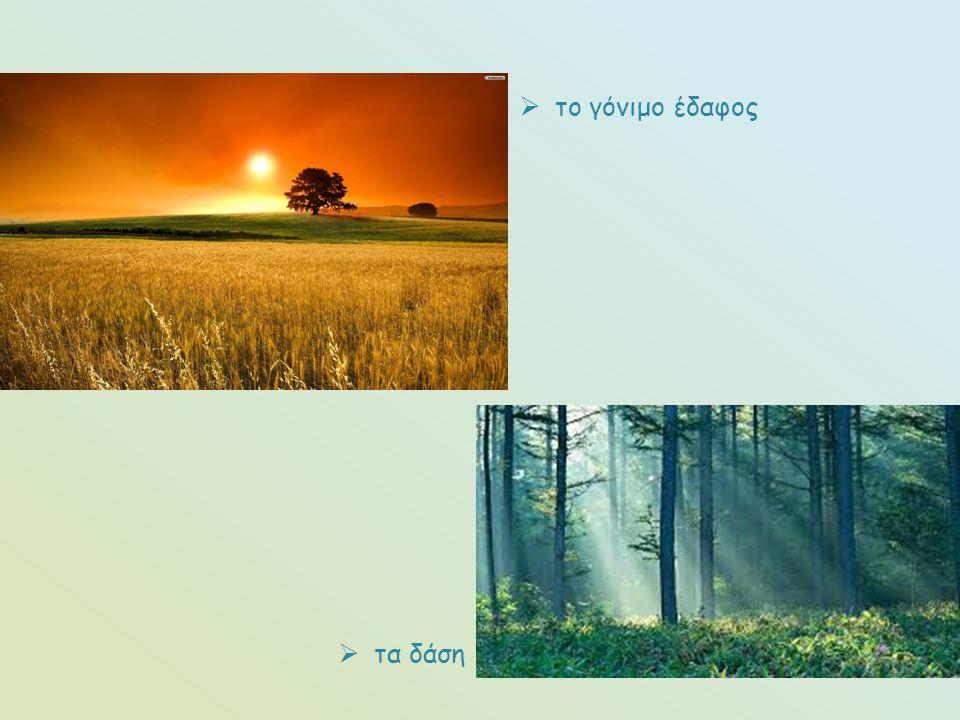 το γόνιμο έδαφος τα δάση