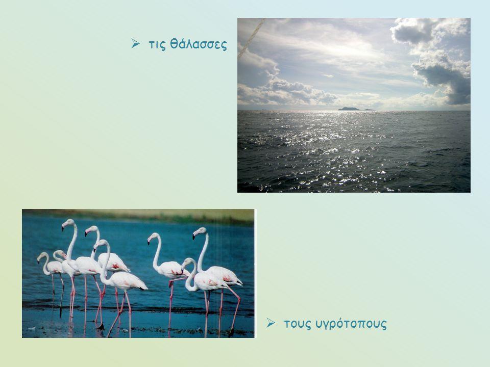 τις θάλασσες τους υγρότοπους