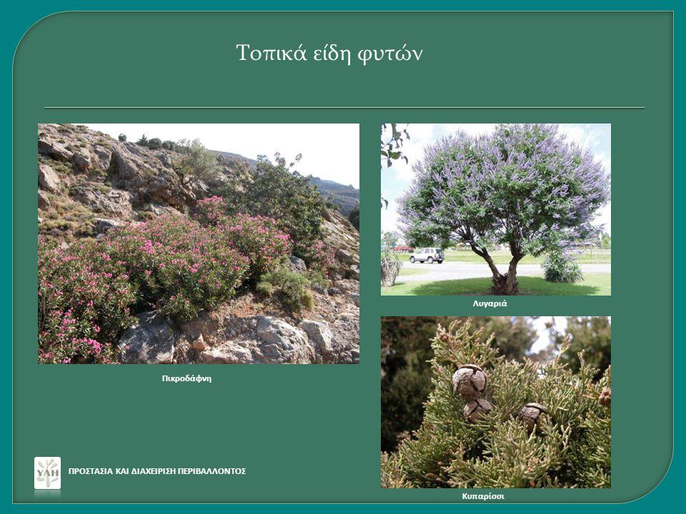 Τοπικά είδη φυτών Λυγαριά Πικροδάφνη