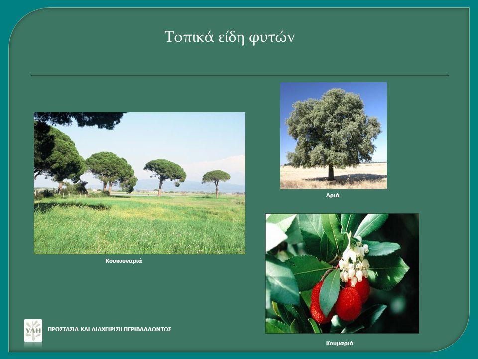 Τοπικά είδη φυτών Αριά Κουκουναριά