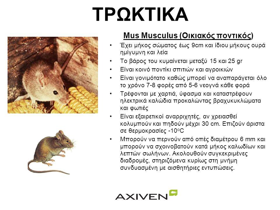 Mus Musculus (Οικιακός ποντικός)