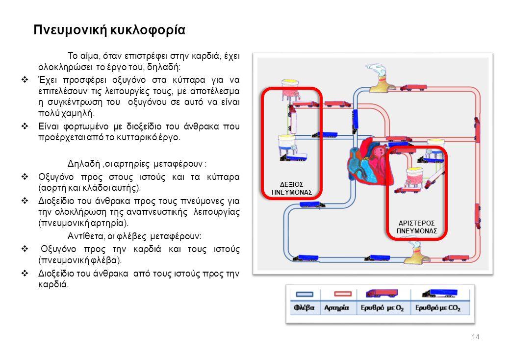 Πνευμονική κυκλοφορία