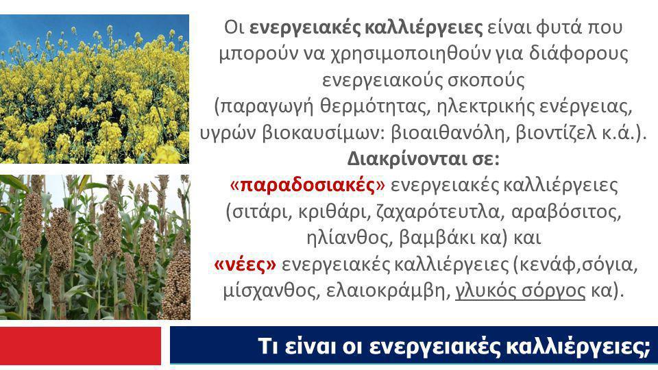 Τι είναι οι ενεργειακές καλλιέργειες;