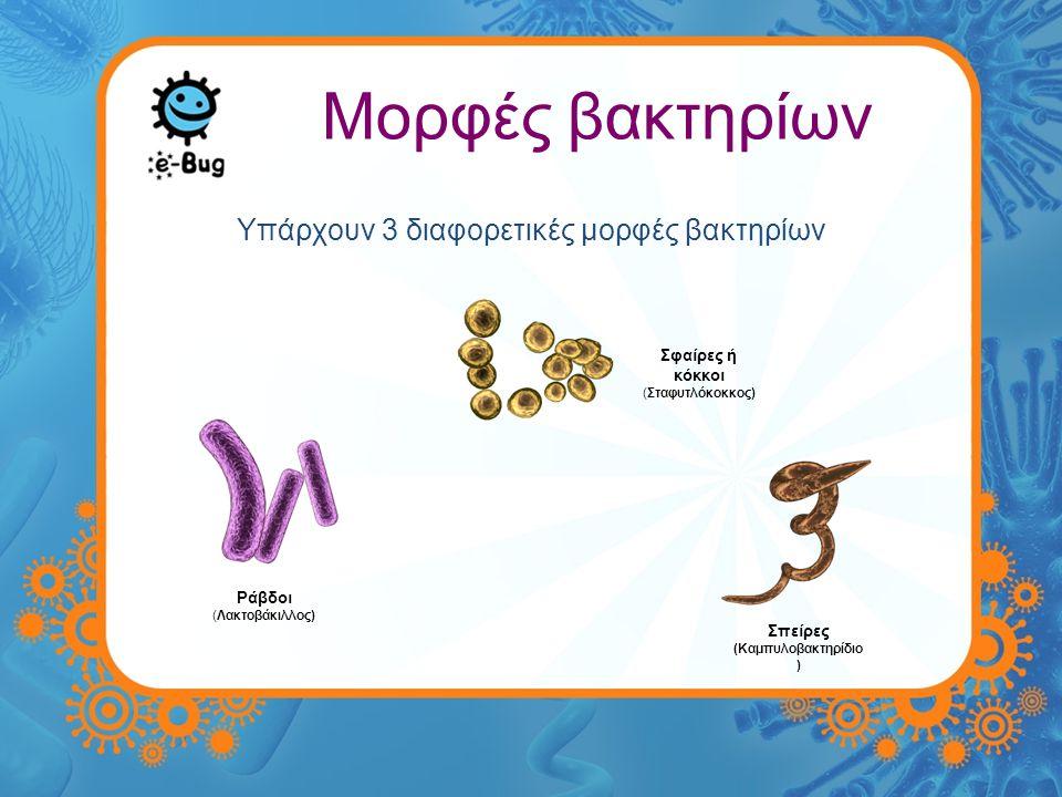 Υπάρχουν 3 διαφορετικές μορφές βακτηρίων