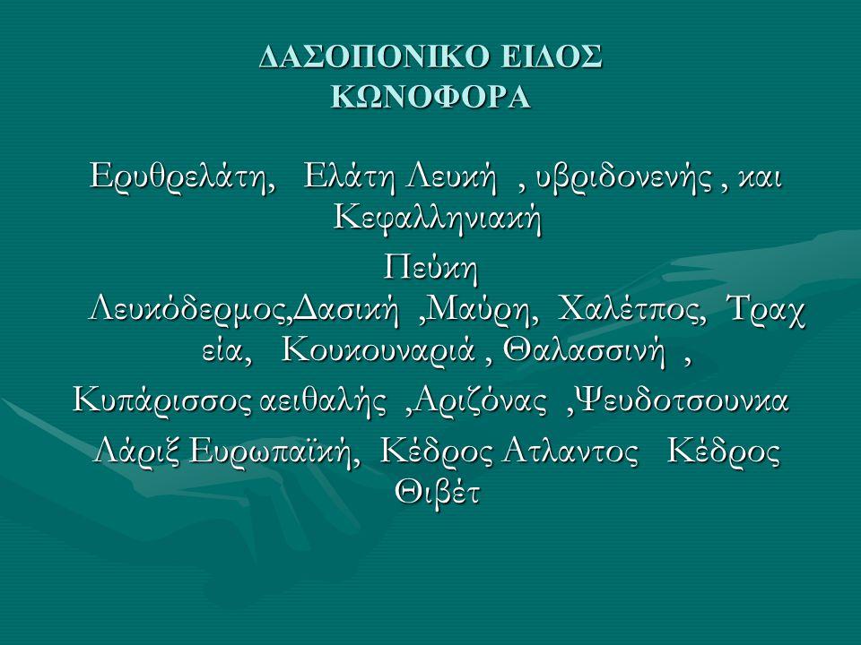 ΔΑΣΟΠΟΝΙΚΟ ΕΙΔΟΣ ΚΩΝΟΦΟΡΑ