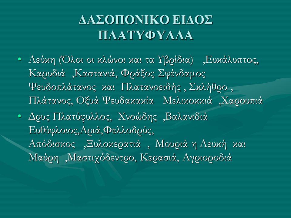 ΔΑΣΟΠΟΝΙΚΟ ΕΙΔΟΣ ΠΛΑΤΥΦΥΛΛΑ