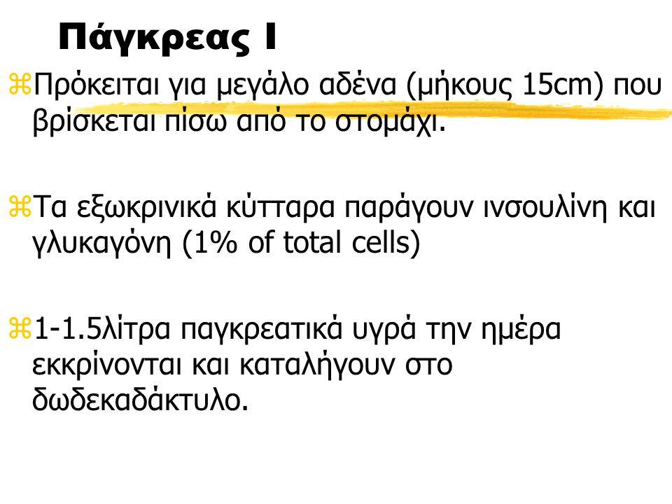 Πάγκρεας Ι Πρόκειται για μεγάλο αδένα (μήκους 15cm) που βρίσκεται πίσω από το στομάχι.