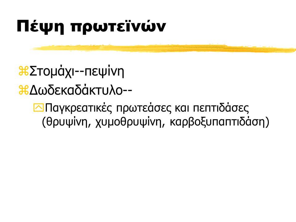 Πέψη πρωτεϊνών Στομάχι--πεψίνη Δωδεκαδάκτυλο--