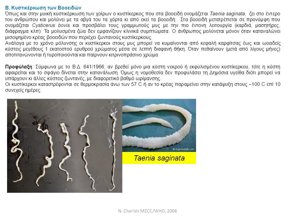 Taenia saginata Β. Κυστικέρκωση των Βοοειδών