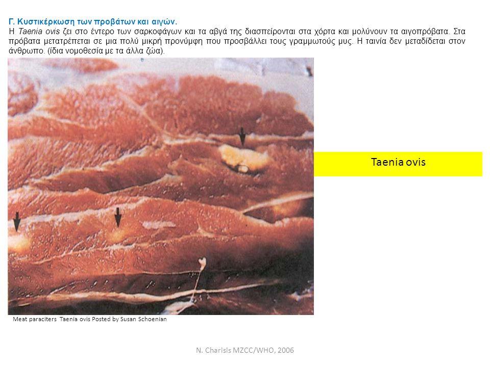 Taenia ovis Γ. Κυστικέρκωση των προβάτων και αιγών.