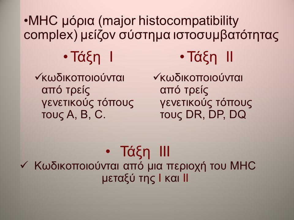 Κωδικοποιούνται από μια περιοχή του MHC μεταξύ της І και ІІ