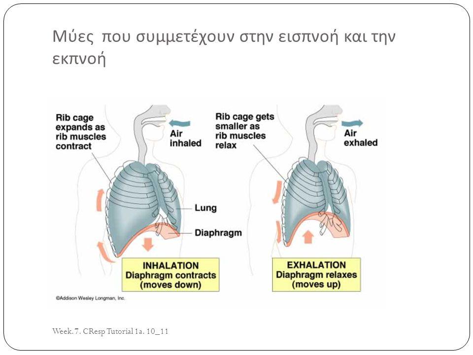 Μύες που συμμετέχουν στην εισπνοή και την εκπνοή