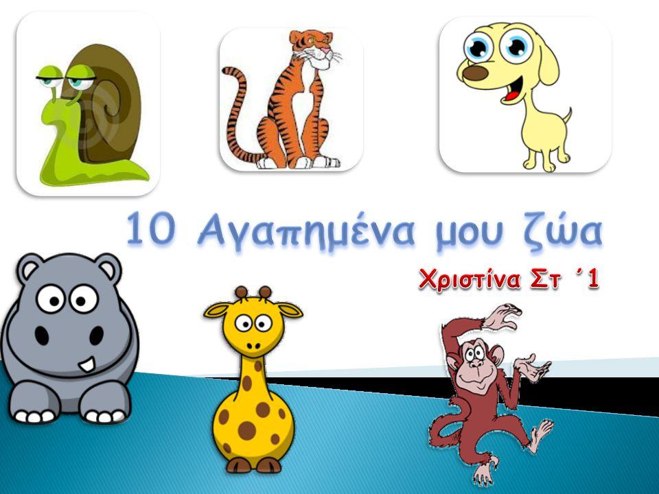 10 Αγαπημένα μου ζώα Χριστίνα Στ ΄1
