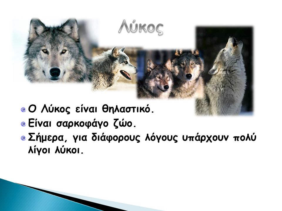 Λύκος Ο Λύκος είναι θηλαστικό. Είναι σαρκοφάγο ζώο.