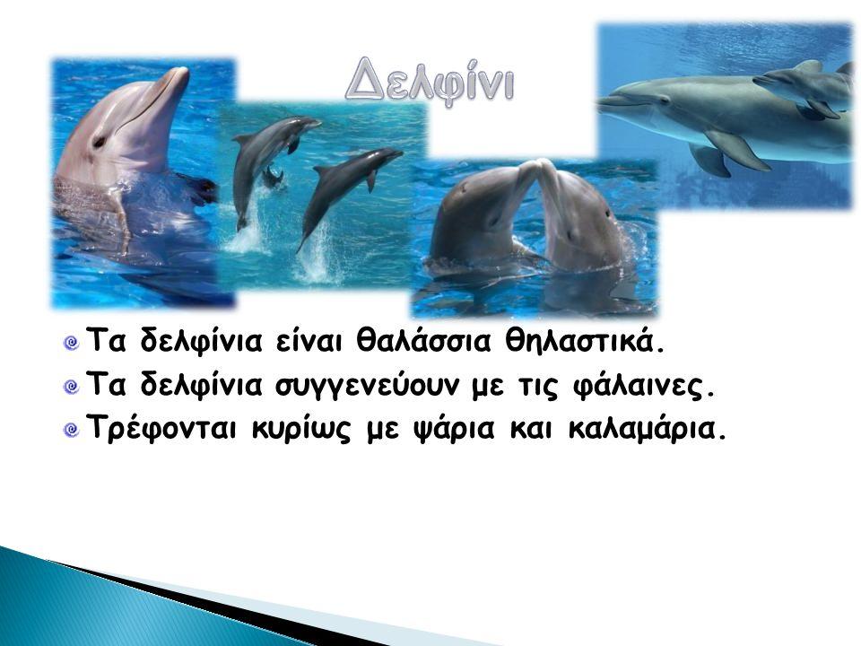 Δελφίνι Τα δελφίνια είναι θαλάσσια θηλαστικά.