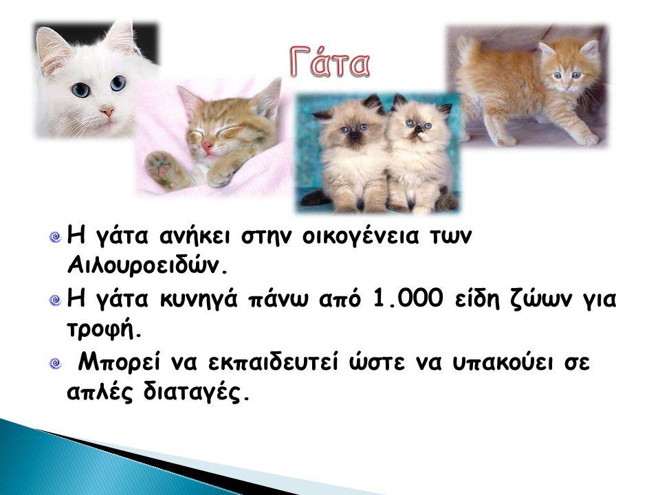 Γάτα Η γάτα ανήκει στην οικογένεια των Αιλουροειδών.