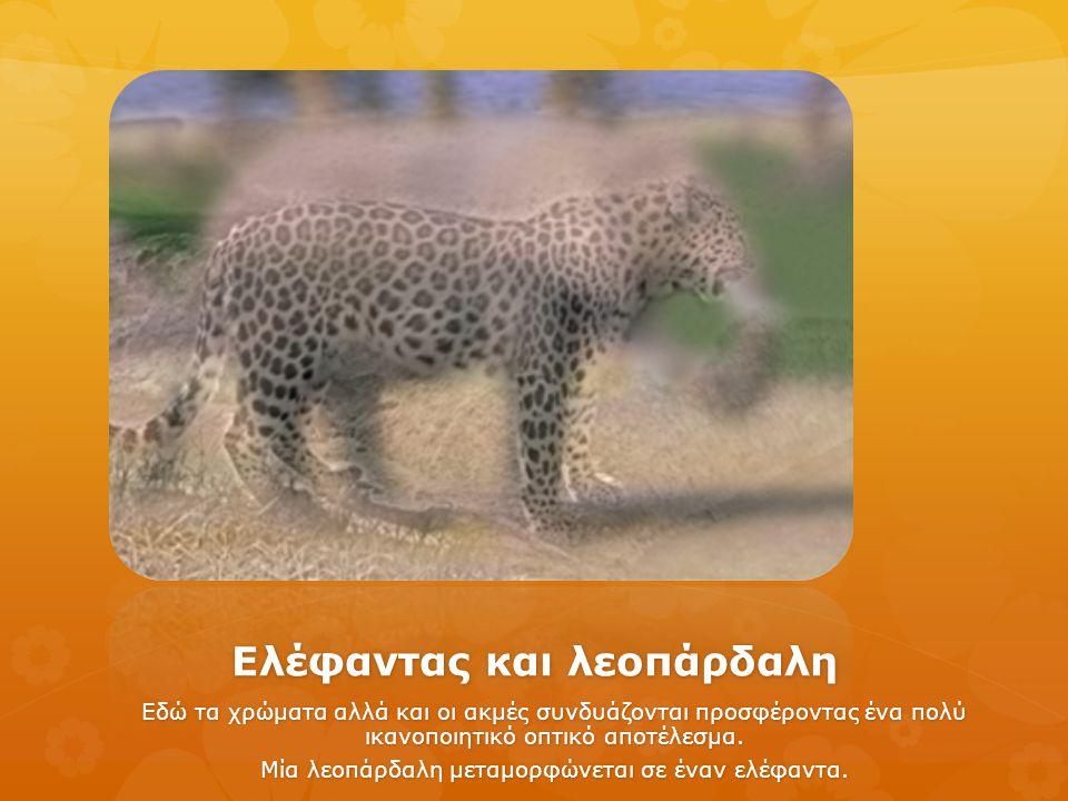 Ελέφαντας και λεοπάρδαλη