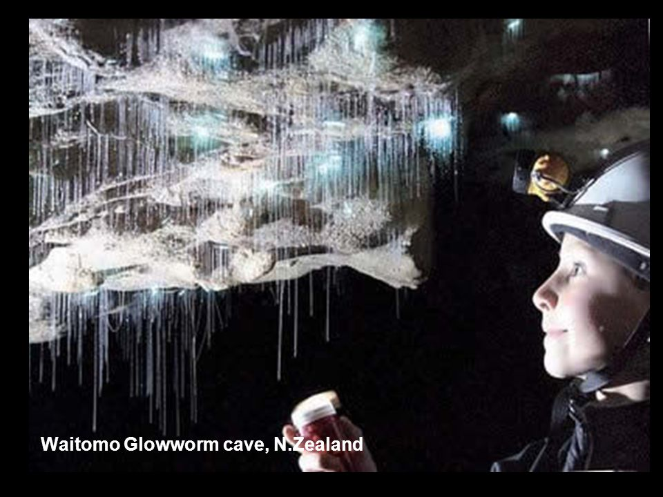 Waitomo Glowworm cave, N.Zealand