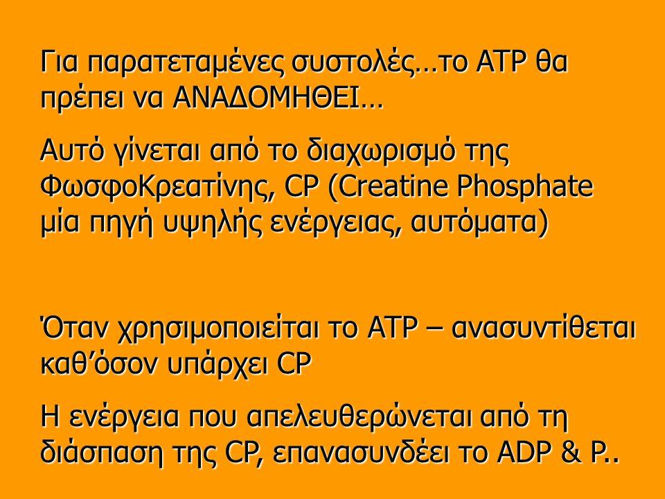 Για παρατεταμένες συστολές…το ATP θα πρέπει να ΑΝΑΔΟΜΗΘΕΙ…