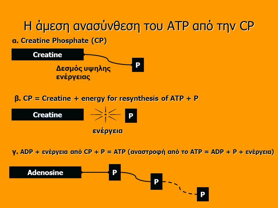 Η άμεση ανασύνθεση του ATP από την CP