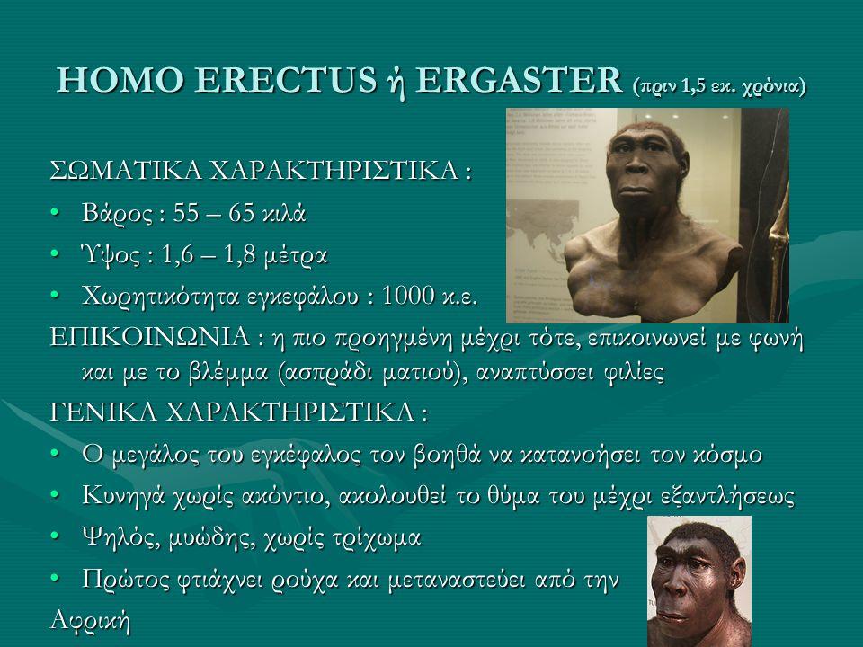 HOMO ERECTUS ή ERGASTER (πριν 1,5 εκ. χρόνια)