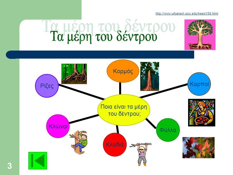 http://www.urbanext.uiuc.edu/trees1/04.html Τα μέρη του δέντρου
