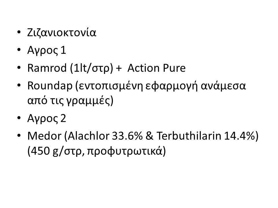 Ζιζανιοκτονία Αγρος 1. Ramrod (1lt/στρ) + Action Pure. Roundap (εντοπισμένη εφαρμογή ανάμεσα από τις γραμμές)