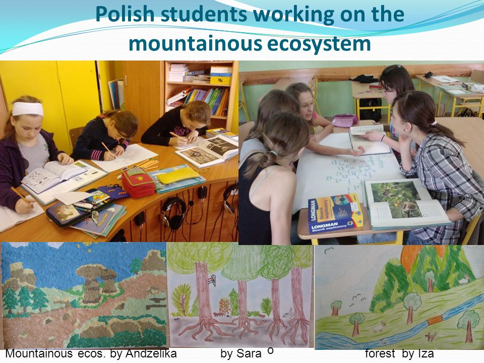 Polish students working on the mountainous ecosystem