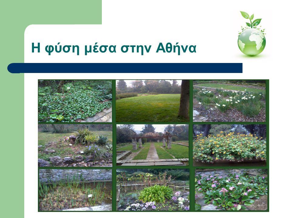 Η φύση μέσα στην Αθήνα