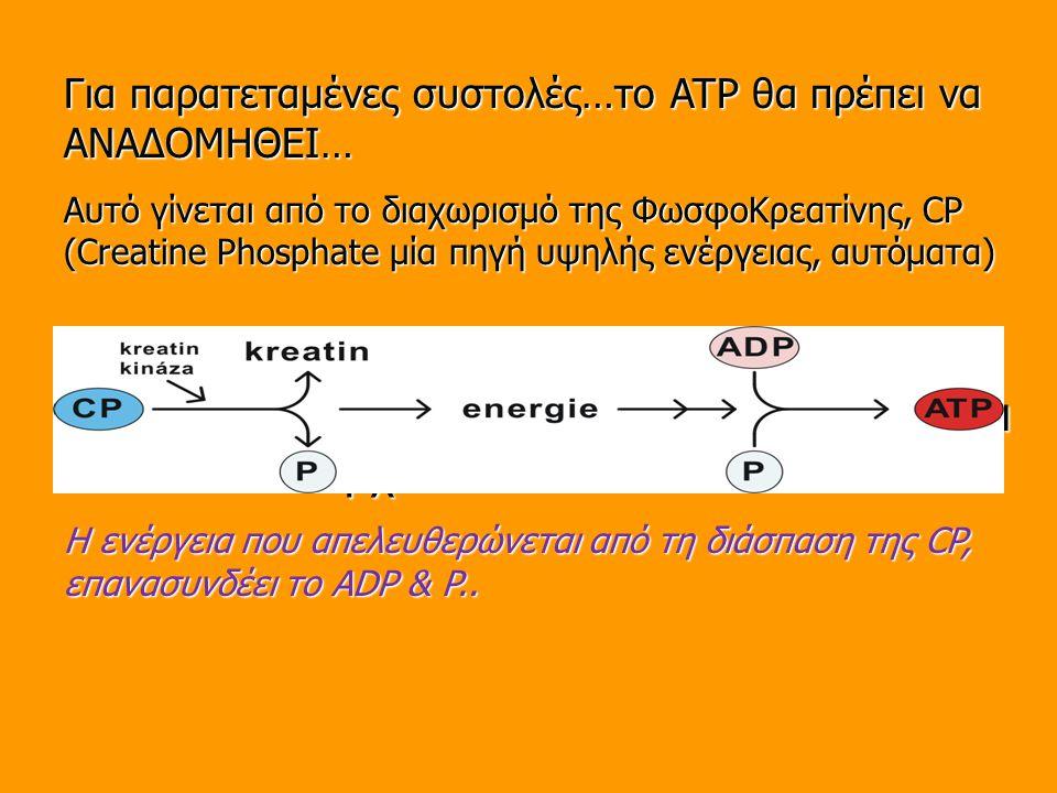 Όταν χρησιμοποιείται το ATP – ανασυντίθεται καθ'όσον υπάρχει CP
